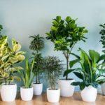 Как правильно подобрать комнатные растения?