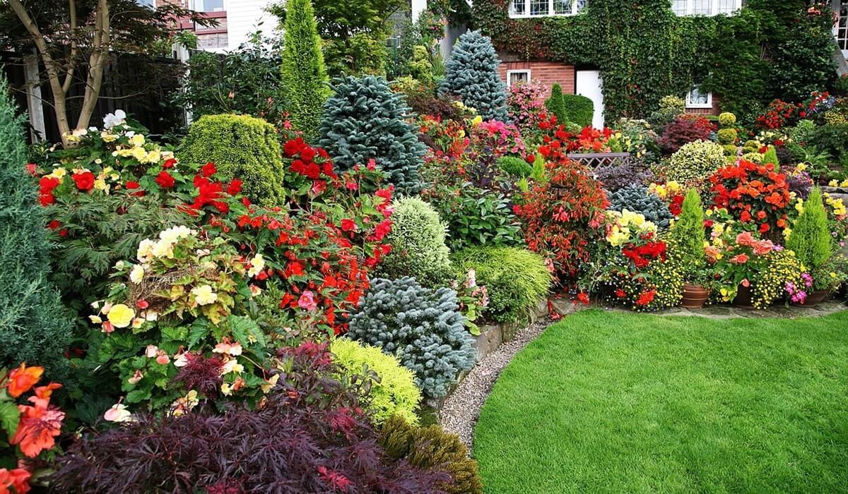 Бордюрные цветы: выбираем окантовку для клумбы и садовых дорожек