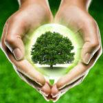 Посадка деревьев: польза для природы и человечества