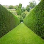 Живая изгородь: выбор растений, идеи, фото
