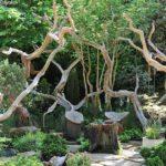 Причудливые коряги – особенности создания рутария в саду