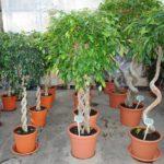 Какие домашние растения не стоит держать дома