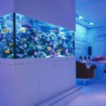 Как выбрать подсветку для аквариума