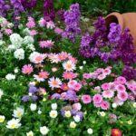Красивые цветочные клумбы: рекомендации специалистов