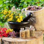 Лекарственные растения для уюта в доме