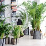 Какие вредные вещества могут скрывать помещения?