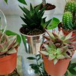 Лучшие и наименее требовательные растения для дома