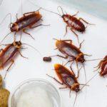 Как предотвратить появление тараканов