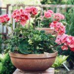 Топ-5 цветущих круглый год неприхотливых комнатных цветов