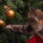 Как защитить елку от кота
