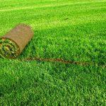 Почему люди полюбили газоны у себя в частном доме