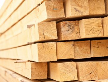 Как порода древесины влияет на качество пиломатериалов
