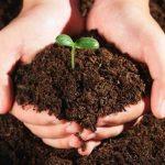 Плюсы и особенности органических удобрений