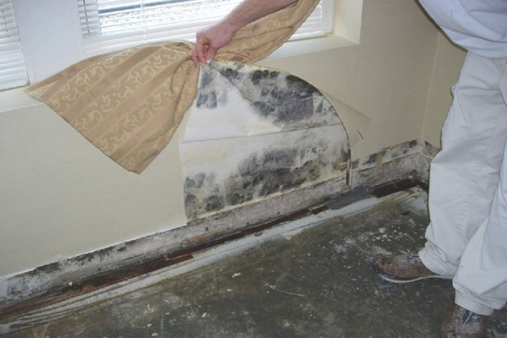 Какие ошибки в ремонте приводят к плесени на гипсокартоне