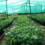 Зачем нужна затеняющая сетка для растений?