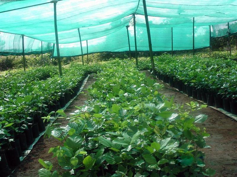Зачем нужна затеняющая сетка для растений