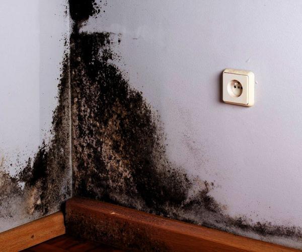 Какой способ избавиться от грибка на стенах самый надежный