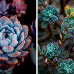 7 растений для оформления интерьера, которые практически не требуют ухода