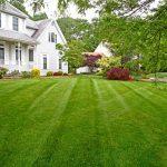 5 причин выбрать рулонный газон для дачного участка