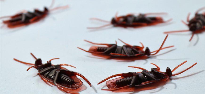 Эффективное средство от тараканов