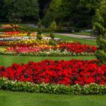 Оформление клумбы многолетними цветами