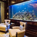 Что нужно знать при выборе аквариума?